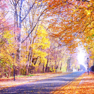 Where to go for Fall Break