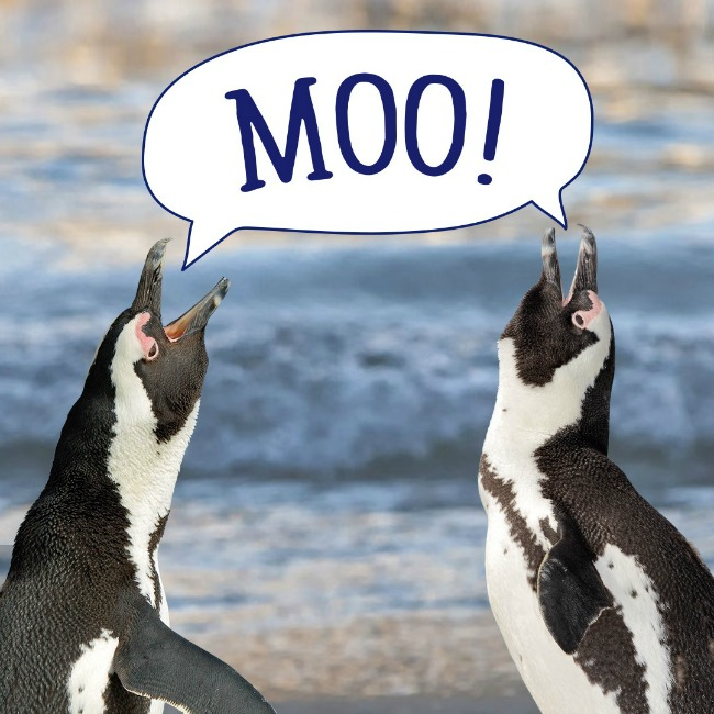 Stonyfield YoKids & the AZA SAFE Program World Penguin Day